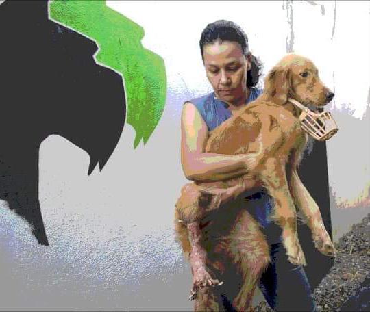 Ann y el rescate de Nala